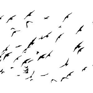 Sea Birds Stencil-0